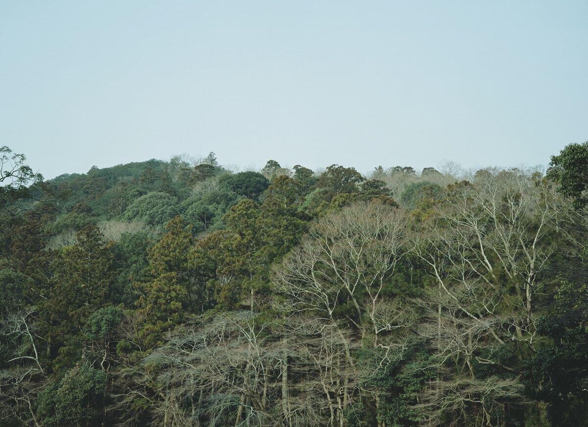kikusashimekazari2.jpg