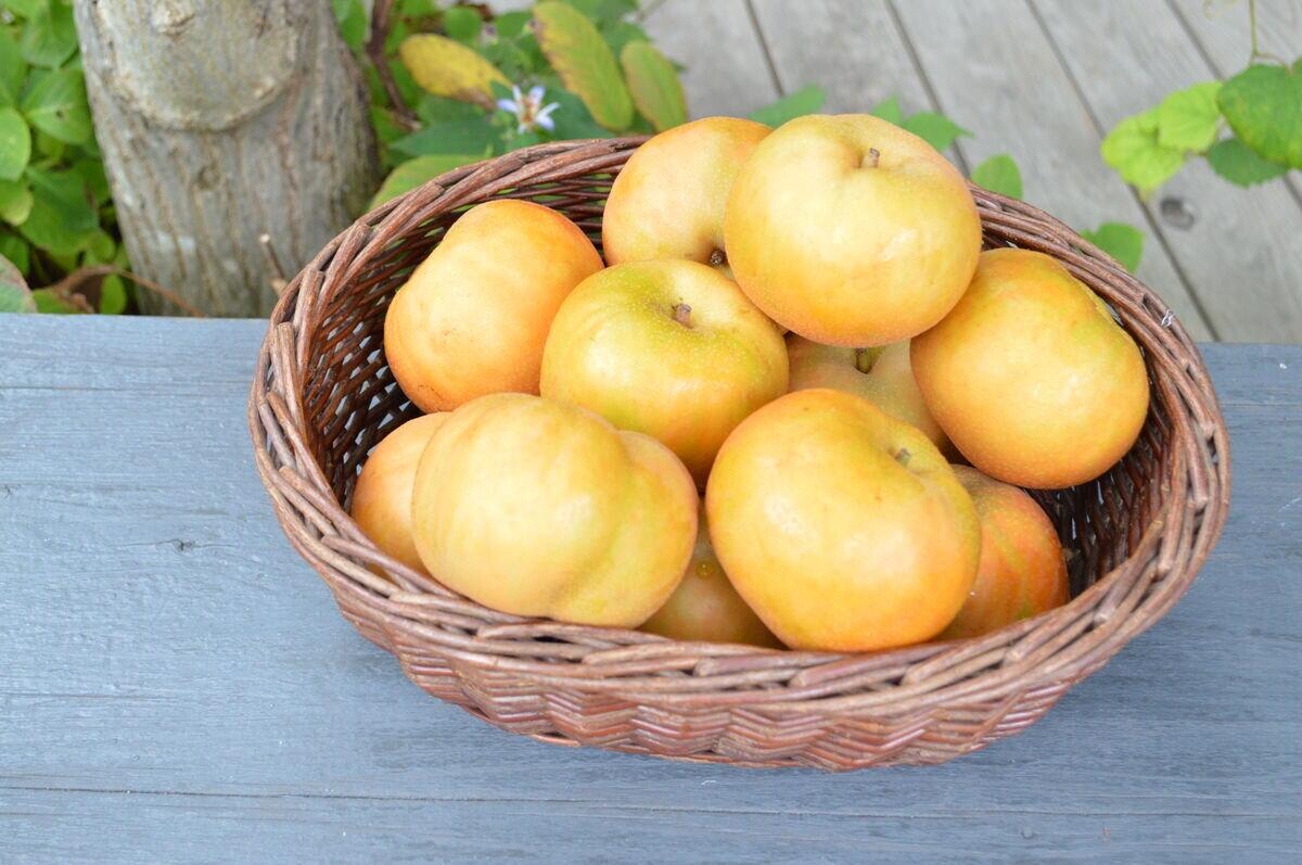 菊井果樹園さんの林檎梨