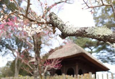 梅と円窓亭.JPG