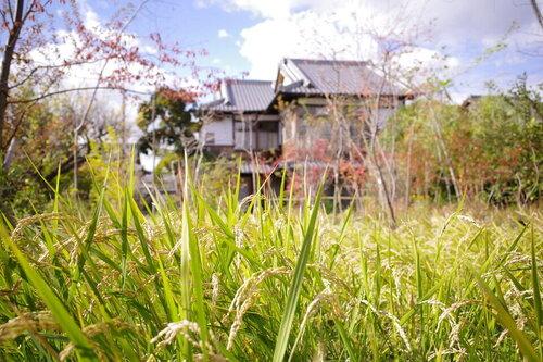 田んぼ20201110 1.jpg