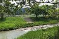 奈良市 東部マルシェ 初夏 開催いたします